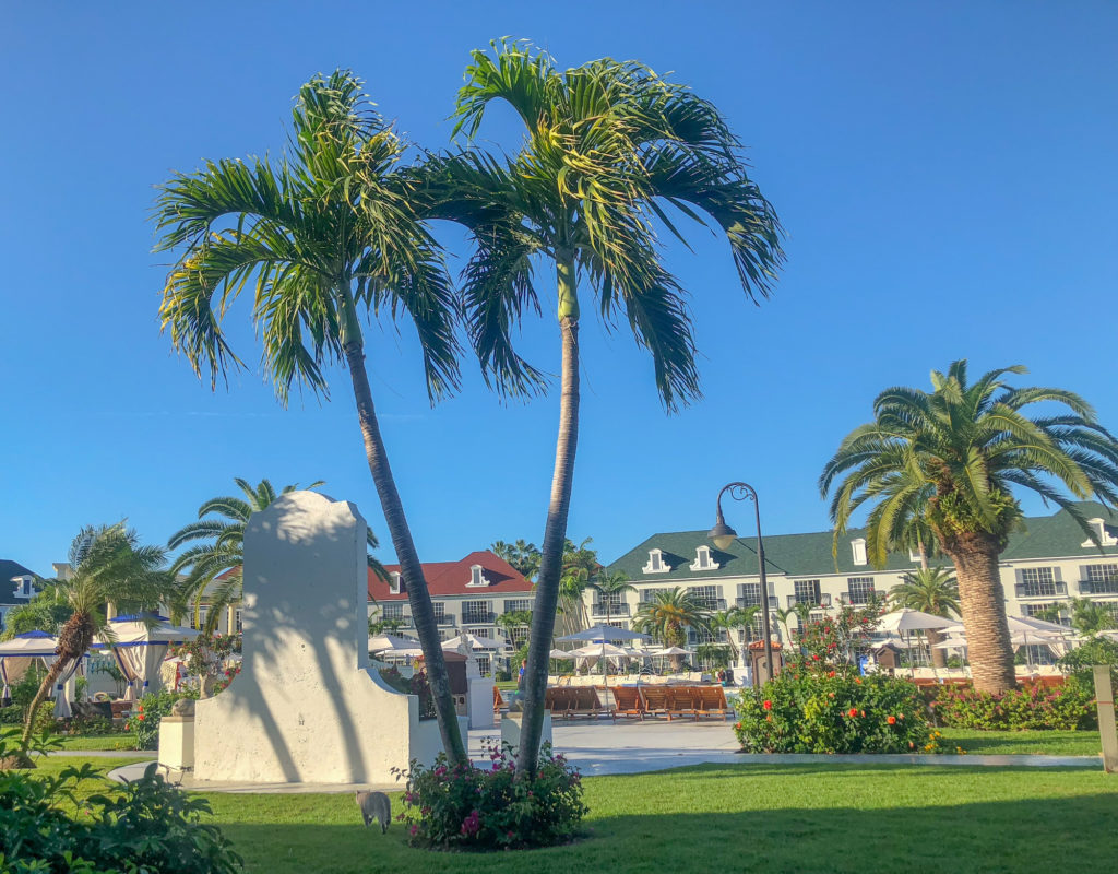 Morning view of palm trees and pool in the French Village when having coffee. Grounds of the French Village outside our room. #beachesresorts #beachesturksandcaicos #beachesresorts #turksandcaicos #allinclusiveturksandcaicos #pls #providenciales #beachesmoms #beachvacations #allinclusivebeachvacations #familyallinclusive #bestallinclusive #familytravelblogger #bestfamilytravleblogger #femaletravelblogger #torontomom