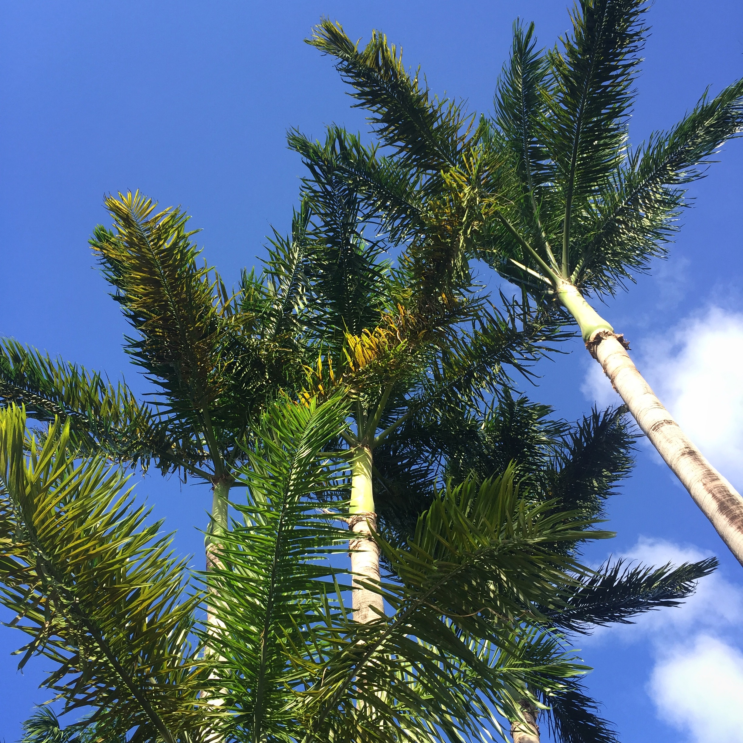 palms trees in negril