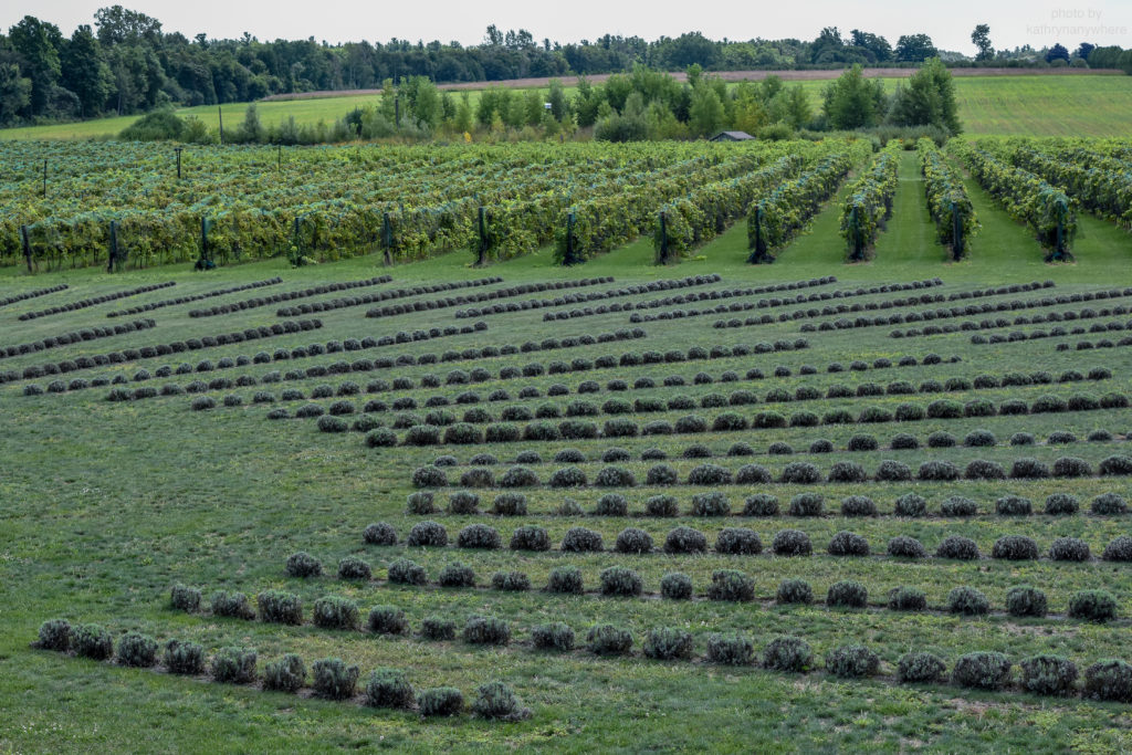 wide shot of lavender farm from above
