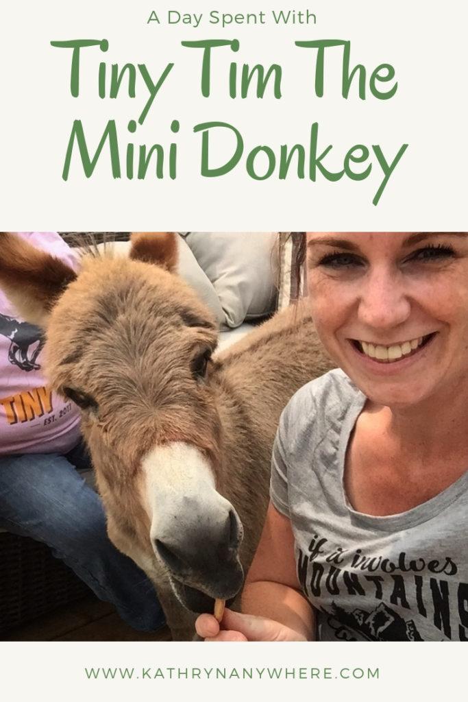 A Day Spent With Tiny Tim The Miniature Donkey #minidonkey #miniaturedonkey #tinytim #tinytimdonkey #apsley #apsleyontario #ontariodonkeys #donkeys #makeanass #doingfunthings #tinytimtheminiaturedonkey #tinytimminidonkey
