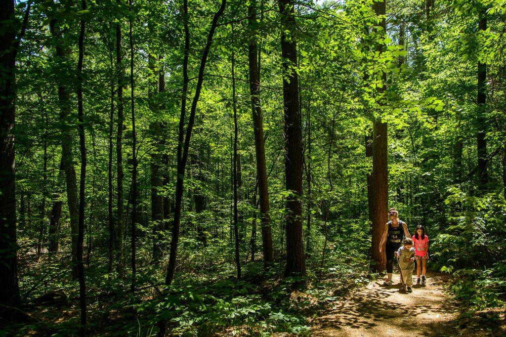 Epic Hikes With Kids - BARRON CANYON TRAIL, walking downhil #discoverON #exploremore #barroncanyontrail #algonquinpark #getoutside #liveoutdoors #ontarioparks #welivetoexplore #familytravelblogger #hikingwithkids #kidswhohike #hikingmom
