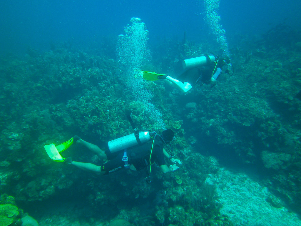 Photo by Mike Pelosi - Scuba Diving in Roatan, Honduras, April 2012 #diving #Scuba #dive #Sea #snorkeling #scubadive #SNUBA #snubalife #whyyoushouldtrysnuba #bayislands #roatanhonduras #kathrynanywhere #solomomtravels