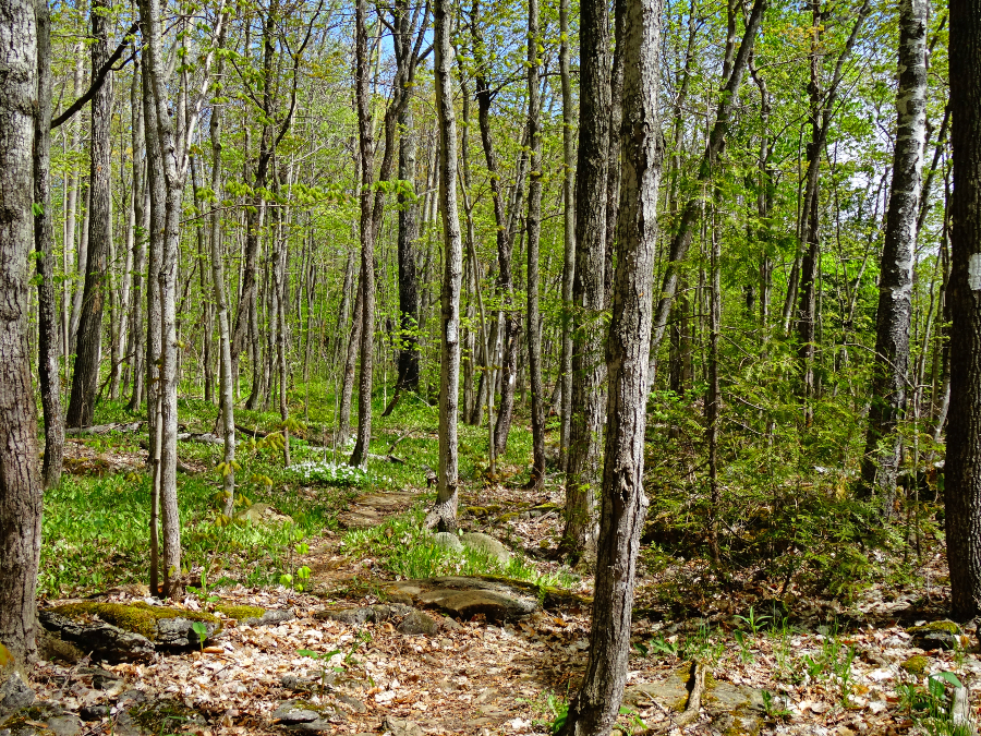 Spirit Rock Conservation Area trail - the world as i see it travel blog
