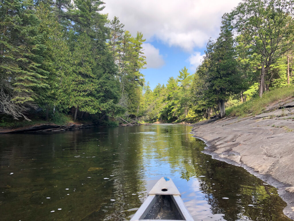 view from the front of the canoe in Eel's creek in the kawarthas