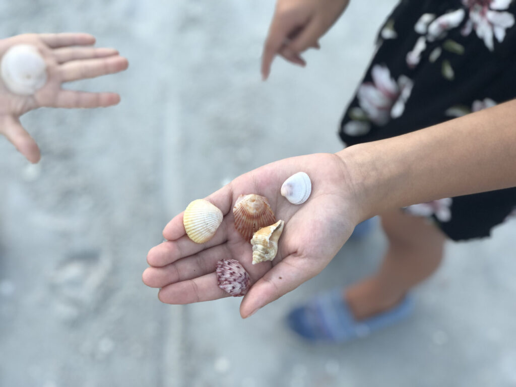 Shelling is serious business on Sanibel Island!