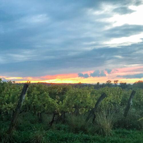 Sunset at Arrowhead Springs Vineyard in Niagara Wine Country on the Niagara Wine Trail