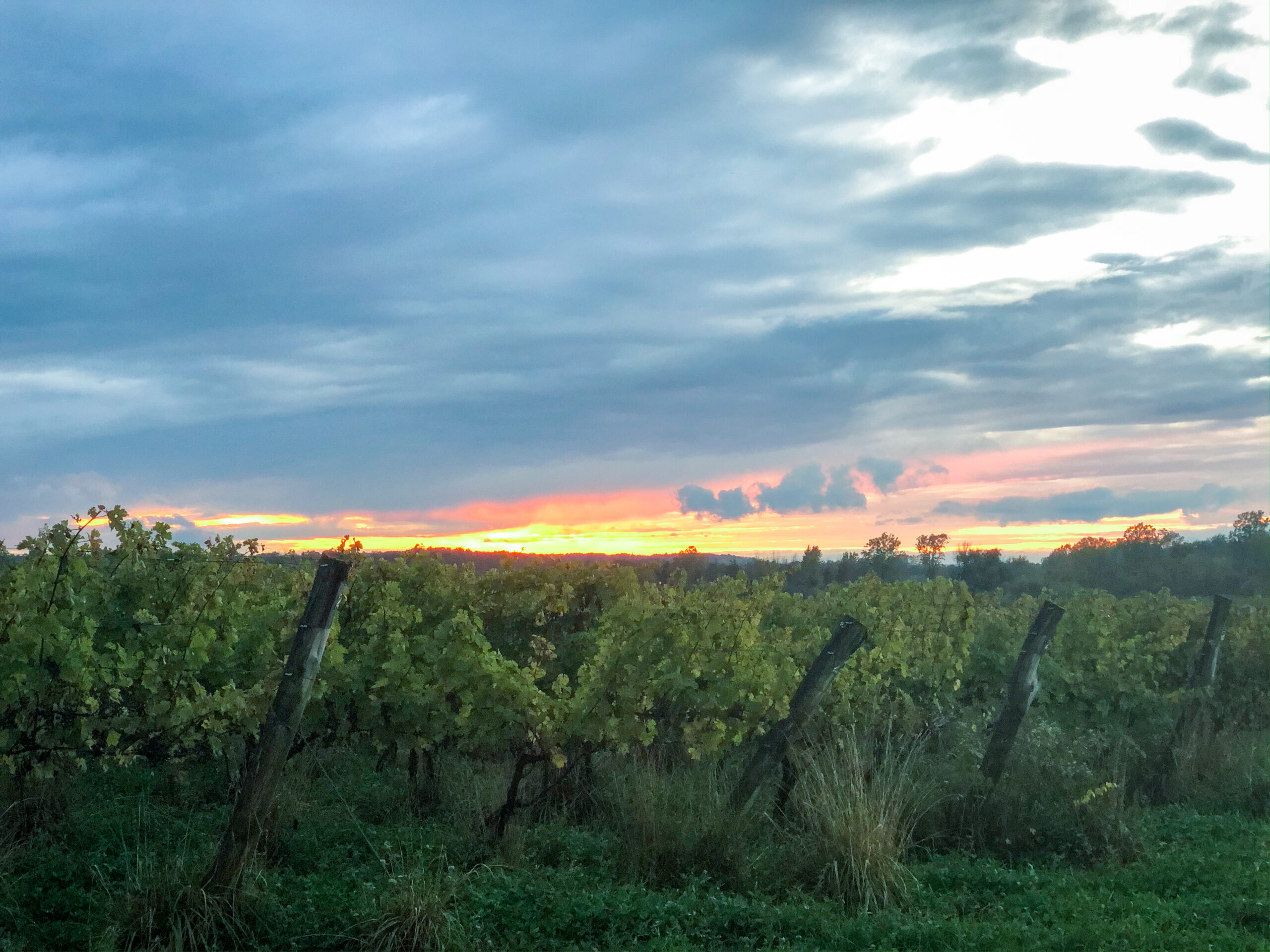 Sunset at Arrowhead Springs Vineyard in Niagara Wine Country on the Niagara Wine Trail