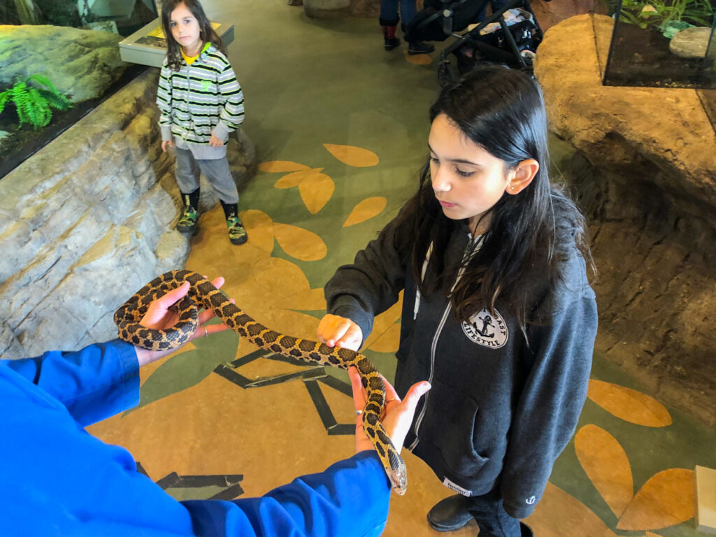 Petting a fox snake at science north
