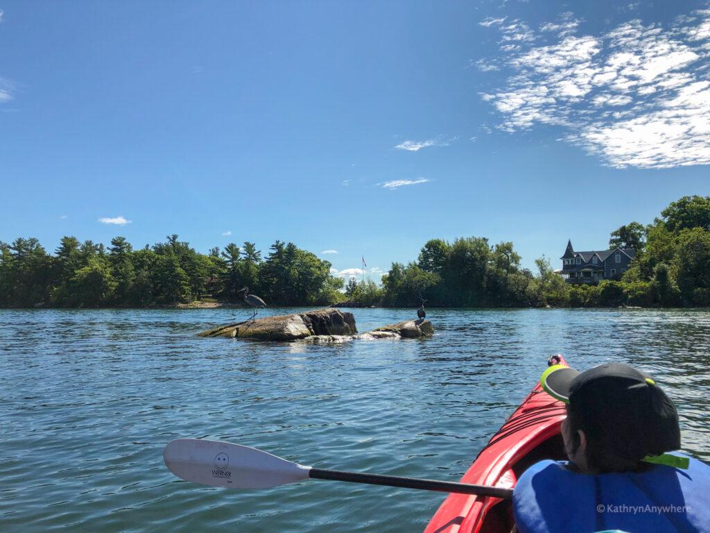 Wildlife as seen from kayak in 1000 islands