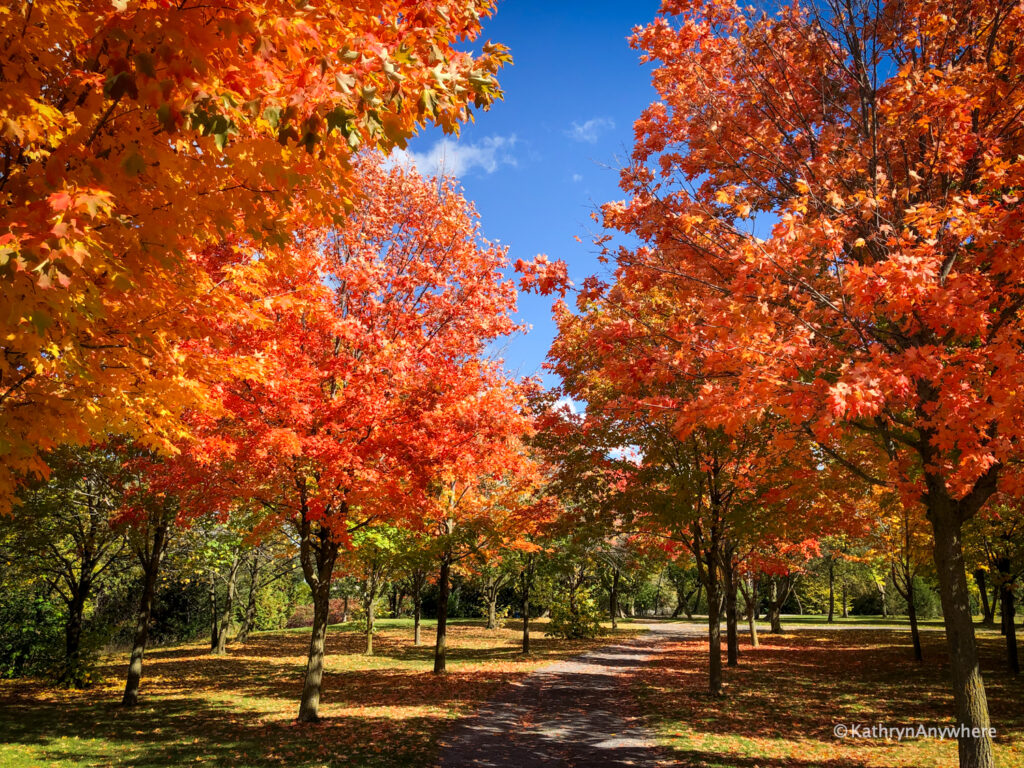 Bay of Quinte Riverside Park Trail autumn leaves