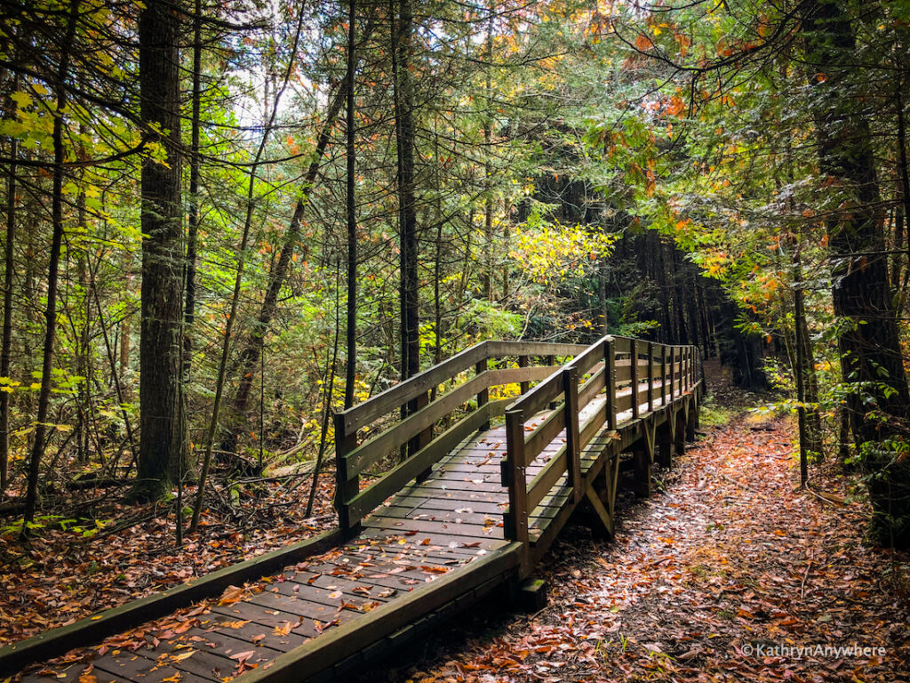 HR Frink Centre hiking trails to see the best fall colours around Belleville and Trenton, Ontario