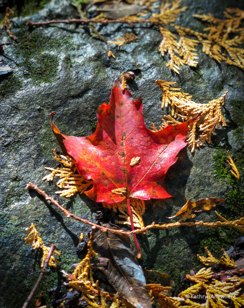 HR Frink Centre red leaf on a rock on Thrasher Road, Plainfield, Ontario