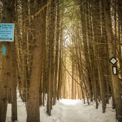 Pretty River Valley Provincial Park on Bruce trail showcasing main and side trail markers