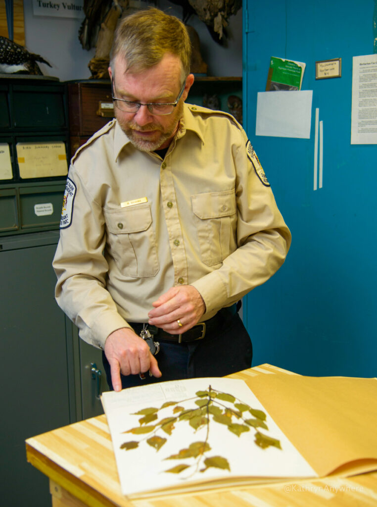 Algonquin PP visitors centre behind the scenes with Rick Stonks showing a collection of flora