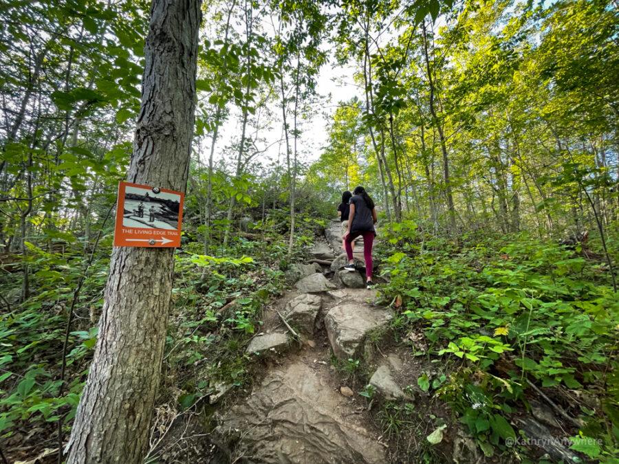 Six Mile Lake Living Edge Hiking Trail